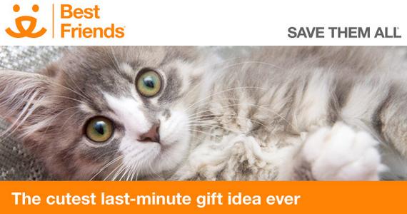 Last-Minute Gift Idea: Sponsor A Homeless Pet