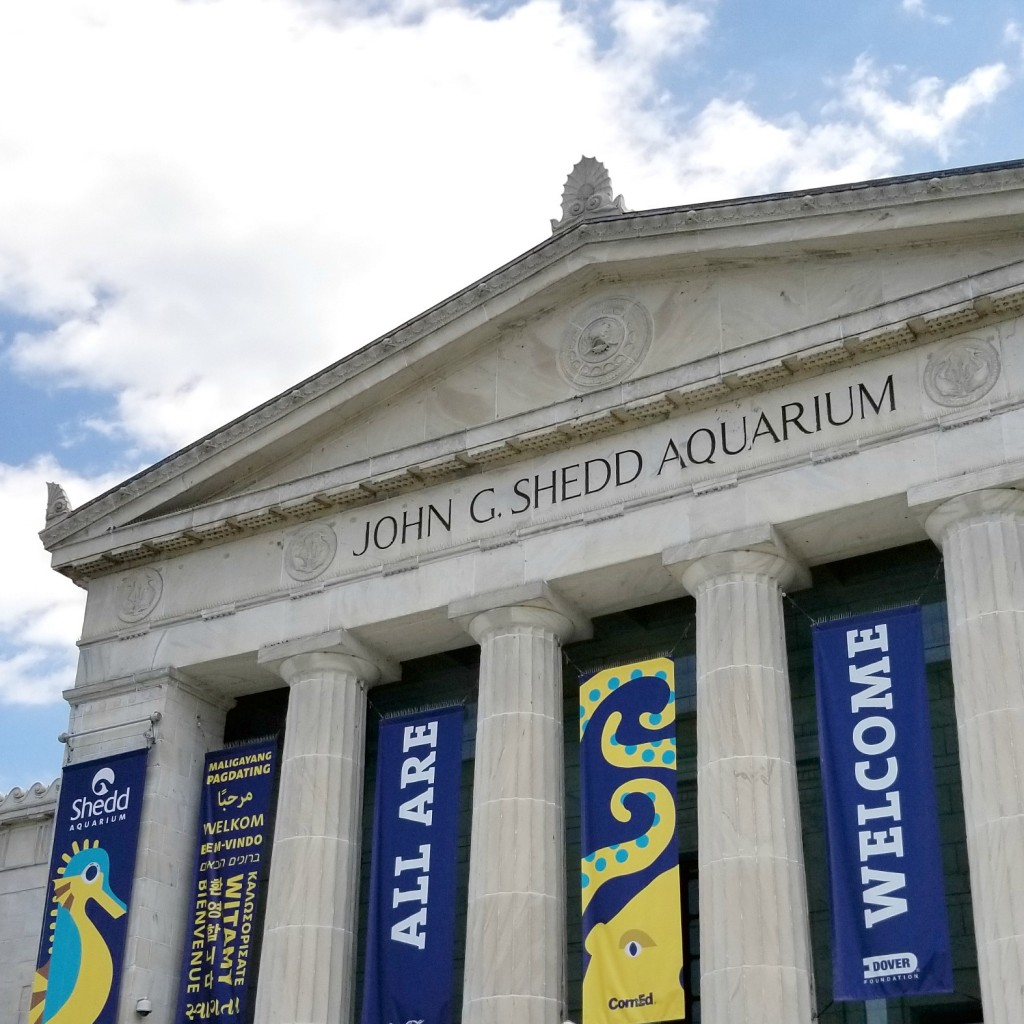 Why You Need To Visit The Shedd Aquarium This Fall